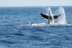 Cape Cod Whalewatching